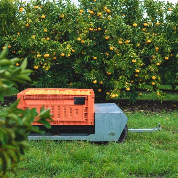 Cart orange